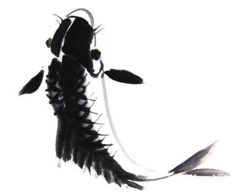 """鲤鱼的基本写意画法"""""""