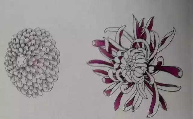 工笔菊花画法详细教程,文末附线描,收藏