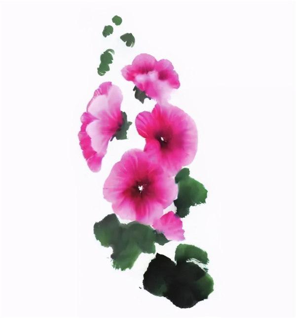 国画技法:蜀葵花的画法步骤,这样画出它的观赏性,好美