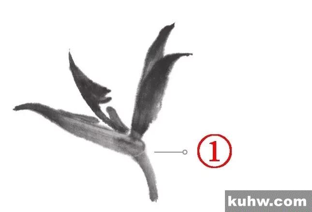 图文教程:鹤望兰、君子兰、虞美人写意画法