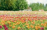 风景植物基础:用水彩如何表现野草、山脉、花园、野果和枫叶