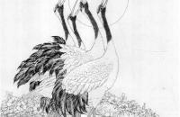 鹤的白描画法